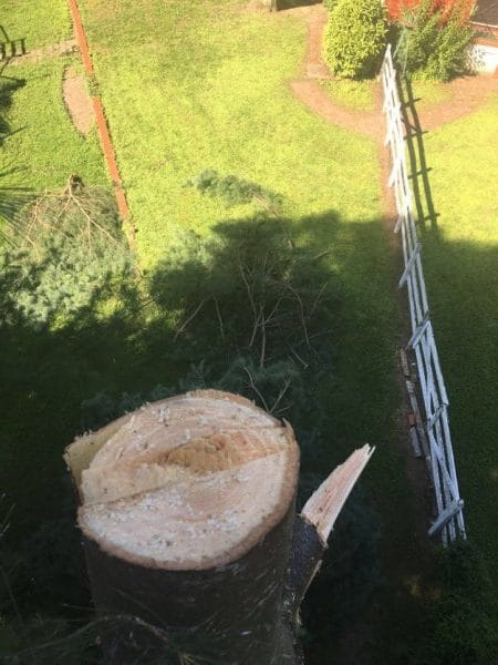 tree removal service mechanicsville virginia