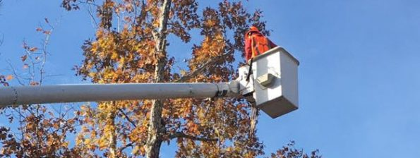 Tree pruning from a bucket truck