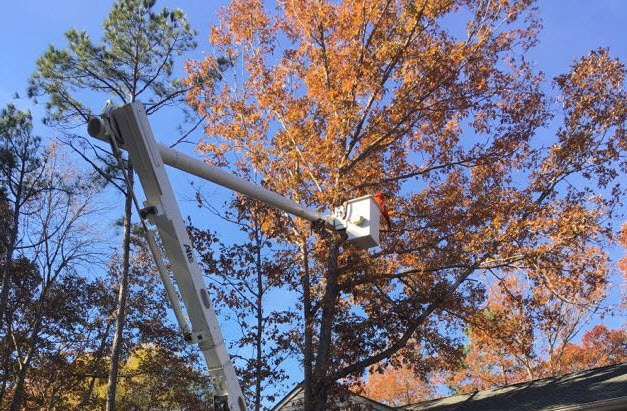 tree trimming service being completed