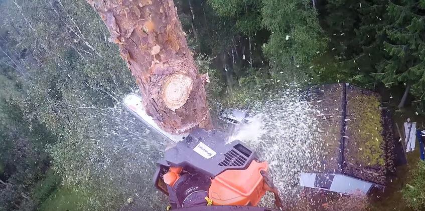 tree trimming & removal near me in Fredericksburg