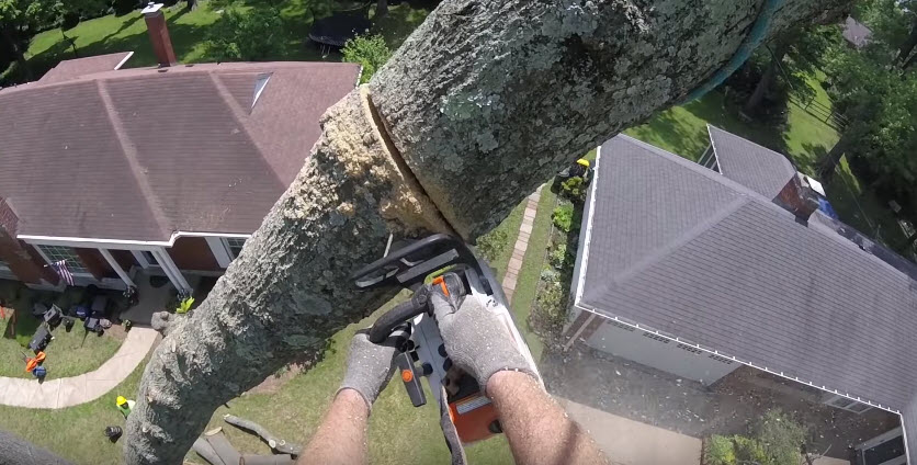 Tree removal being done by an arborist at Steadfast Tree Care Bowling Green