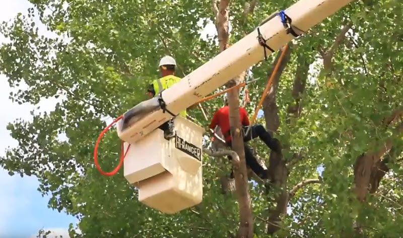 tree trimming & removal near me in Stafford