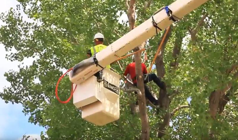 tree cutting near me - tree service stafford va