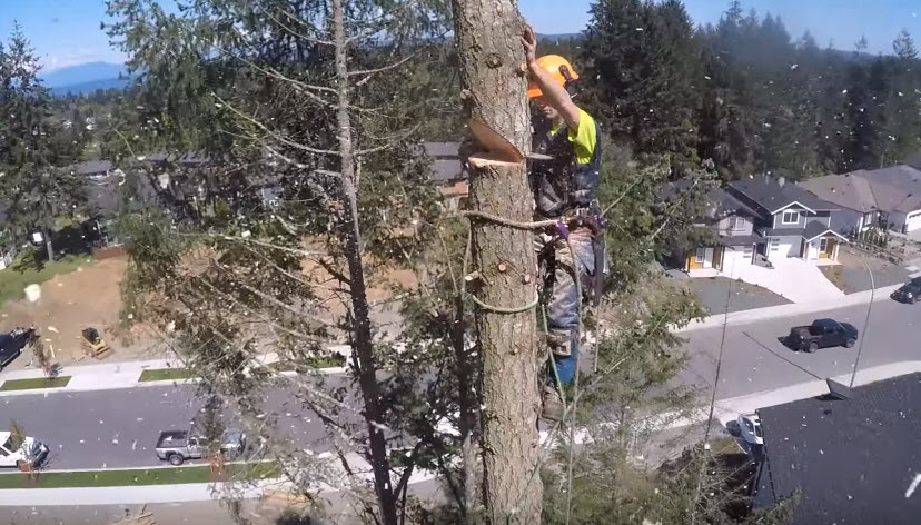 Tree removal service by an arborist at Steadfast Tree Care Richmond
